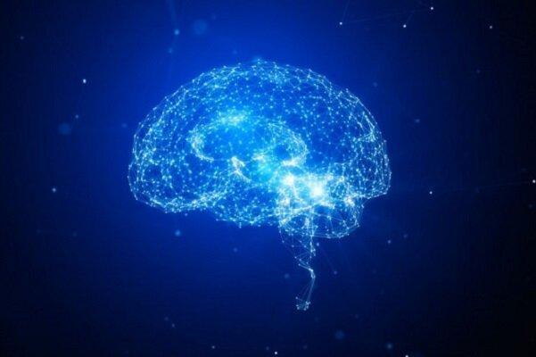 درمان سرطان مغز با بازسازی تومور در مغزهای کوچک آزمایشگاهی