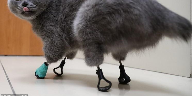 چاپ سه بعدی گربه ناتوان را احیا کرد