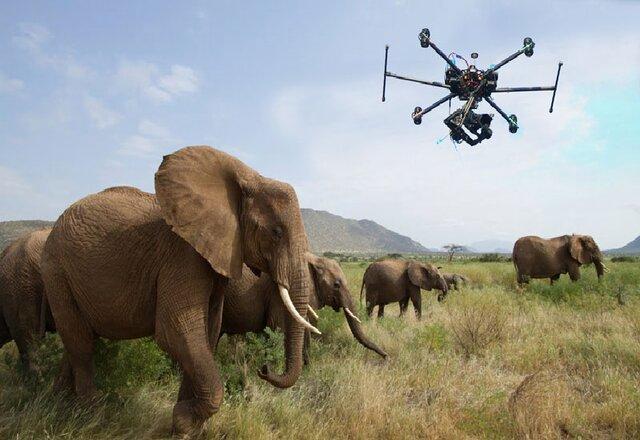 نجات گونه های در حال انقراض با پهپاد!