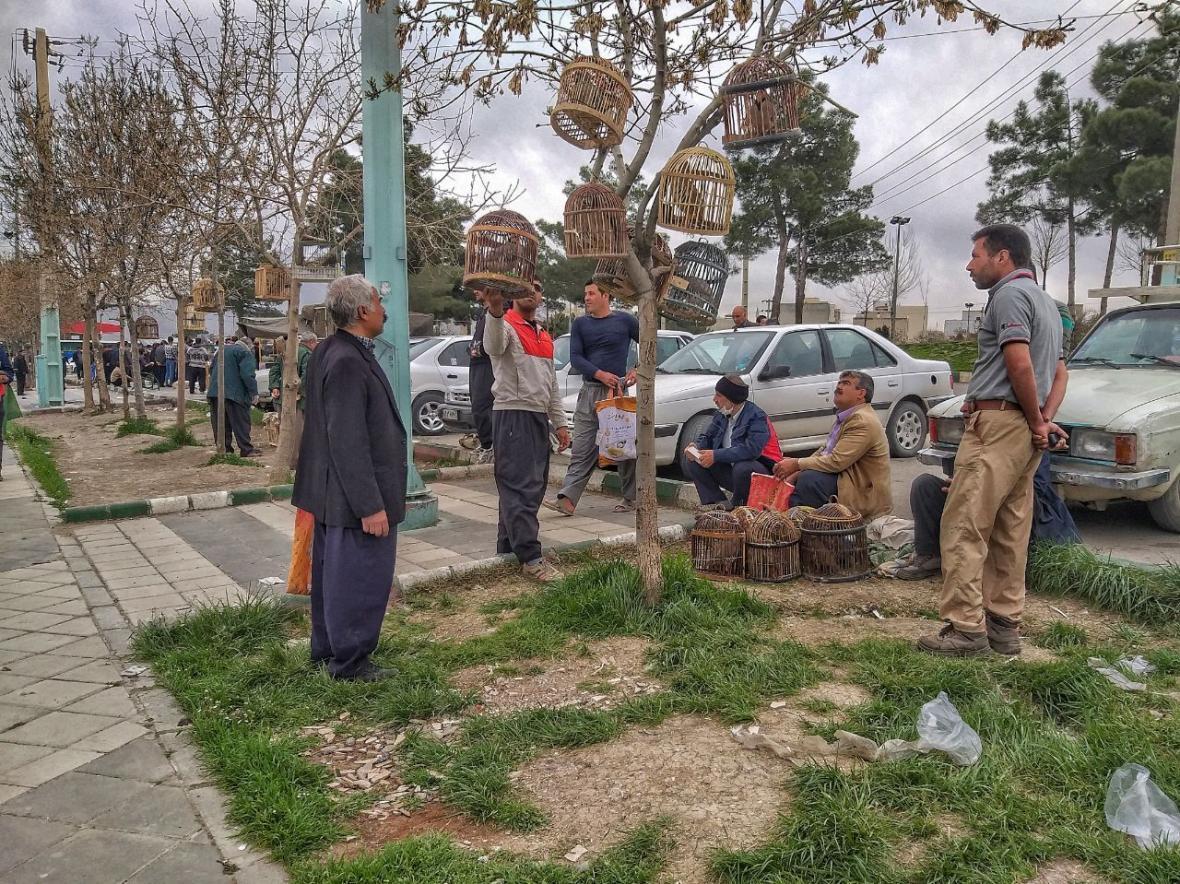 خبرنگاران کمین کرونا در بازار پرنده فروشان کرمانشاه