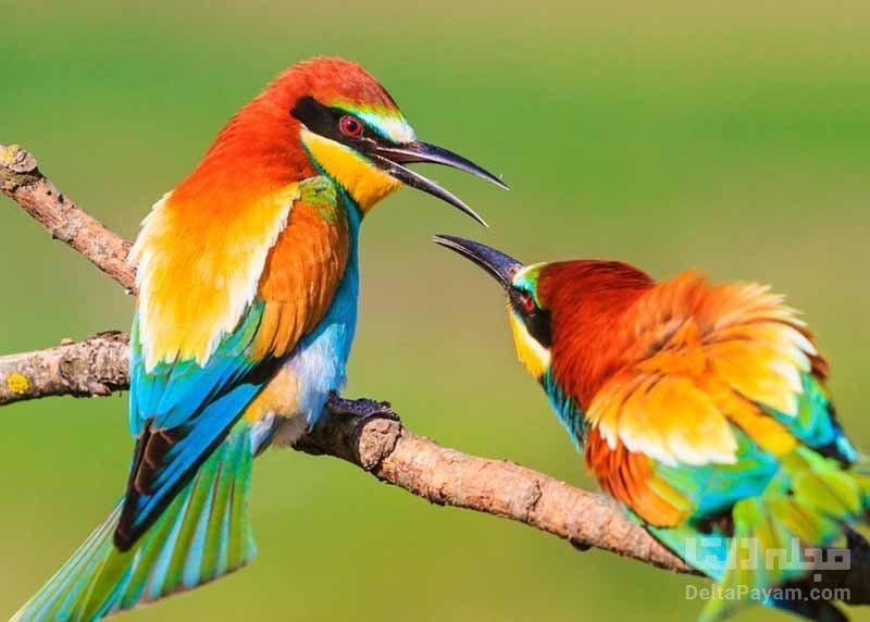 تغییر آواز پرندگان طی قرنطینه کرونا