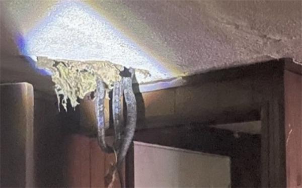 مهمانان ناخوانده خطرناک در زیر سقف خانه!