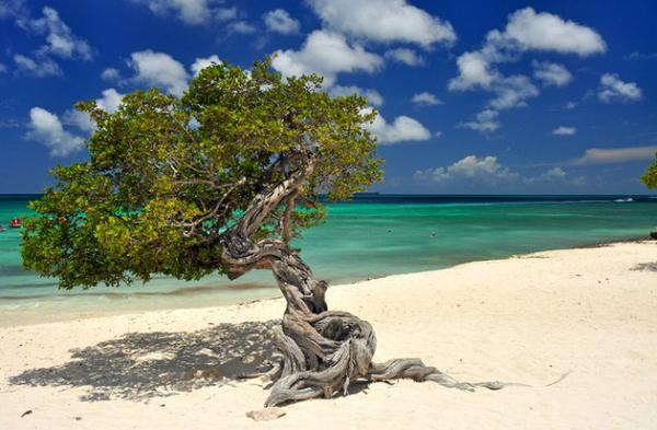 10 ساحل برتر و زیبا در آروبا